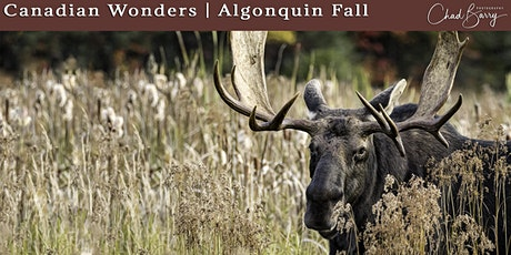 Canadian Wonders | Algonquin Photo Workshop - Autumn 2021 with Chad Barry tickets