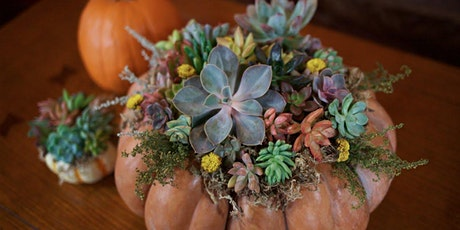 "Sips & Stems-""Punkulents"" Succulent Pumpkins! tickets"