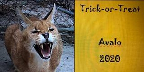 Spooky Cats & Trick-or-Treat at Avalo Cat Sanctuary tickets