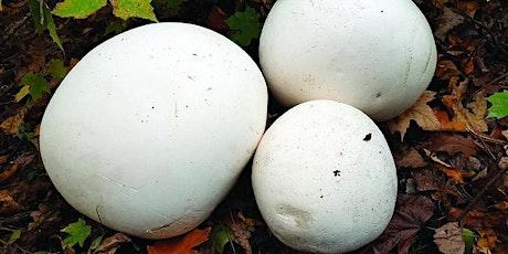 Mushroom Hunt tickets