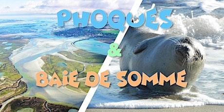 Découverte des Phoques sauvages & Baie de Somme - DAY TRIP tickets
