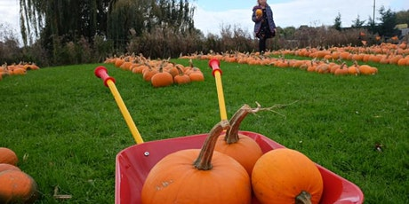 Pumpkin Picking and Carving - Halloween Fun for Kids. Book your slot tickets