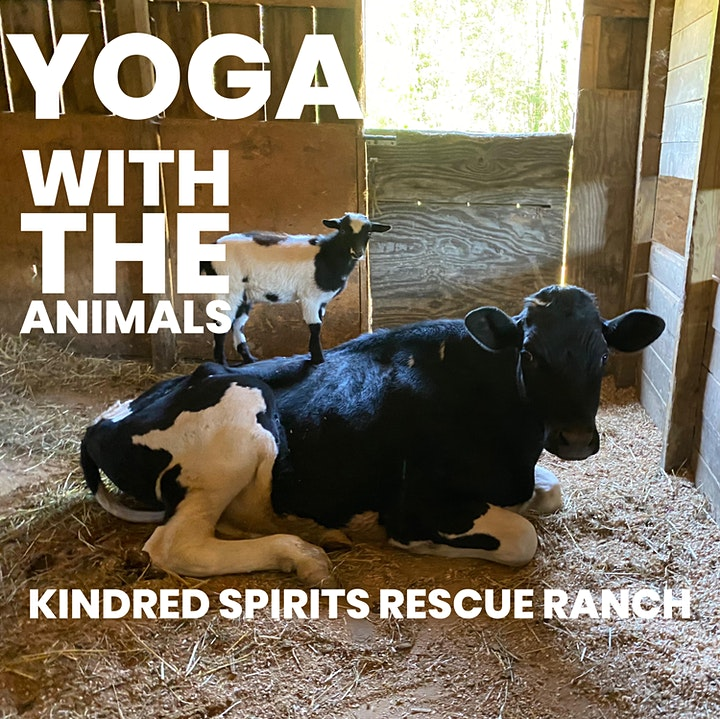 Yoga With The Animals image