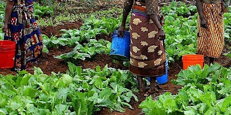 Impact Assessment in Food and Nutrition Security Projects and Programmes tickets
