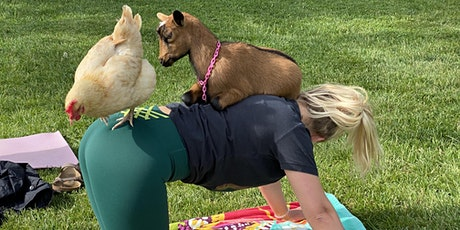 Tiny Goat Yoga tickets