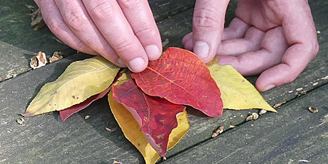 Fall Forest Therapy Walk tickets