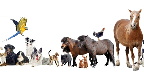 Animal Communication Course tickets