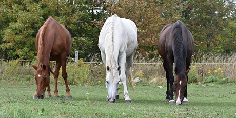 Equine Industry Symposium 2020 tickets