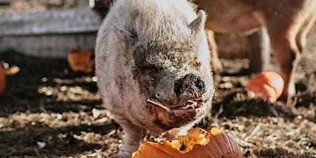 Pumpkin Drop at The Alice Sanctuary tickets
