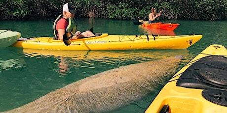 Manatee Photo Safari - Kayak and Paddleboard Tour tickets