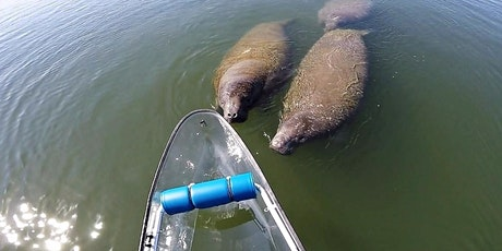 VKOC - Miami's Only Clear Kayak Manatee Photo Safari tickets
