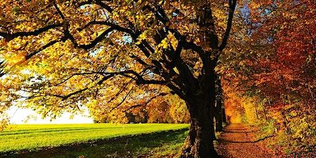 Stärke Dein Immunsystem -  gesund und gestärkt in den Herbst Tickets