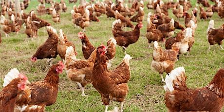 """Nuffield Farming Mini Conference: """"Animal Welfare"""" (4/5)"""
