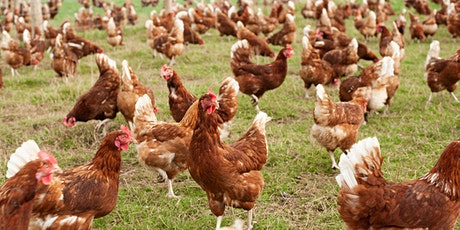 "Nuffield Farming Mini Conference: ""Animal Welfare"" (4/5) tickets"