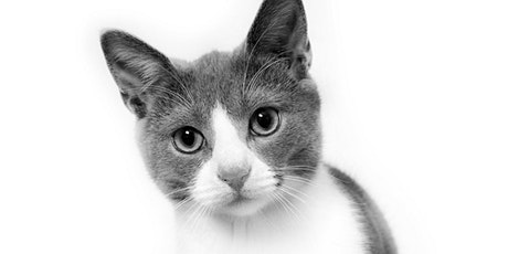 60min Animal Sketching Art Lesson -  Cat @5PM (Ages 6+) tickets