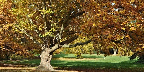 Fall Tree Tour at Goodale Park tickets