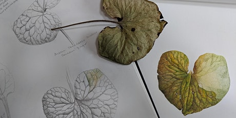 See a Plant, Draw a Plant