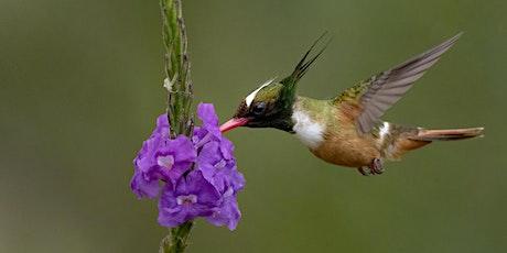 Photographing Birds w/ Tropical Birding Guide Ben Knoot tickets