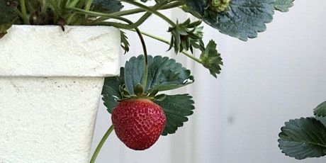 Grow Your Own Strawberries--Fall 2020 tickets