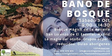 Baño de Bosque sábado  3 Oct - Otoño Bosque La Herrería El Escorial entradas