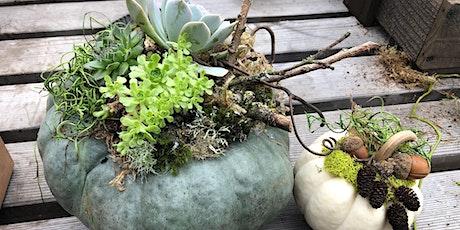 Pumpkin Succulent Planter Workshop (#2)