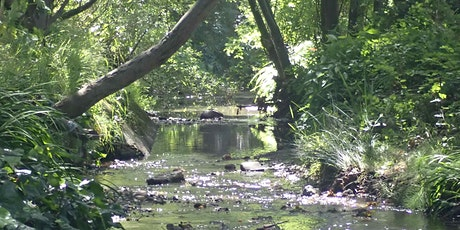 Explore how Native Americans used plants on Cerrito Creek and Albany Hill tickets