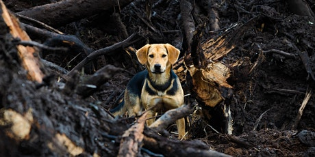 Workshop: Protecting animals in bushfires tickets