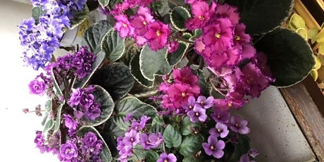Central Arkansas  African violet Society  sale tickets