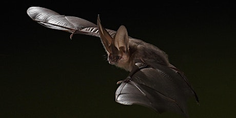 OnTopic Lecture: Amazing World of Bats, Nature's Tiny Fighter Jets tickets