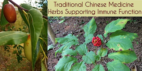 Herbs Supporting Human Immune Function in Traditional Chinese Medicine tickets