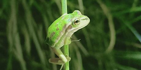 Central Coast Bell Frog Surveys tickets