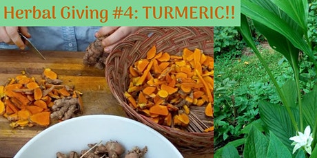 Herbal Giving #4: Turmeric tickets