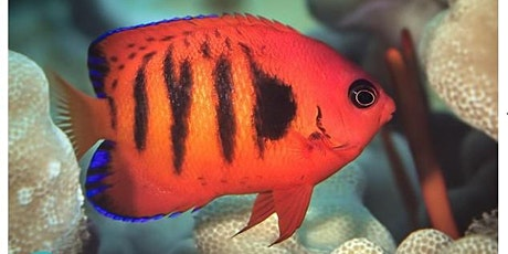 Fish ID | Angelfish and Butterflyfish tickets
