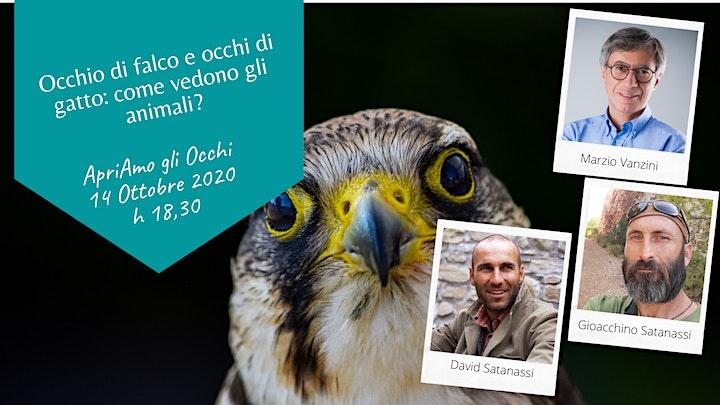 Immagine Vista di falco e occhi da gatto: come vedono gli animali?