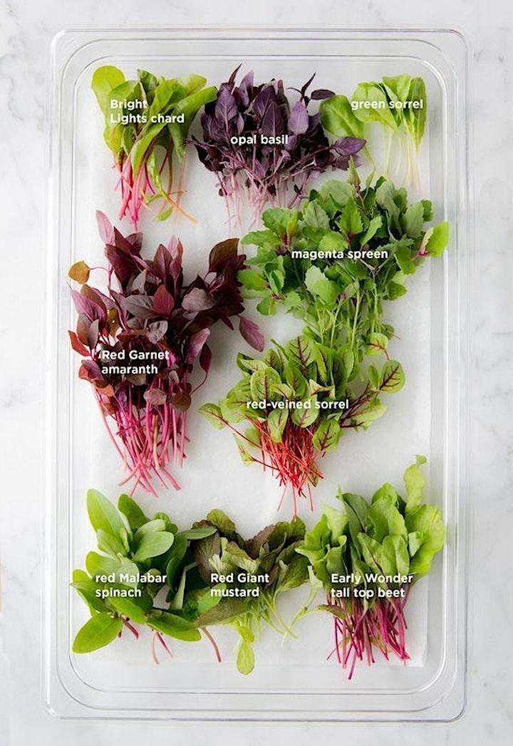 Virtual Urban Farming Workshop - Learn to Grow Microgreens at Home image