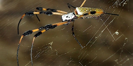 Palm Beach County PCO Webinar Series: Spiders Identification & Management tickets