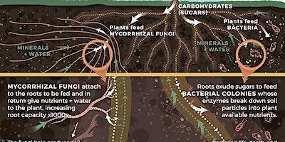 Soil & Regenerative Agriculture