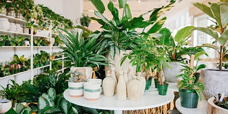 Basic Indoor Plant Care & Selection (Live Stream) tickets