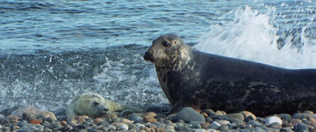 Grey Seals of South Walney Nature Reserve tickets
