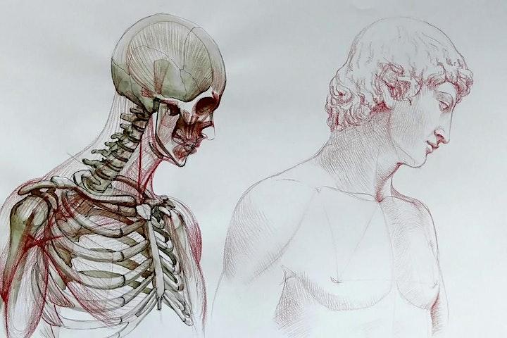 Immagine APERICERCA - 20 maggio 2021 - Dell'anatomia e dell'arte