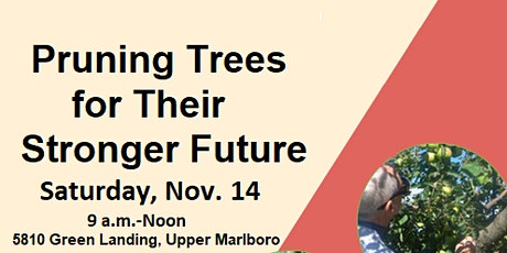 Pruning Trees  Workshops tickets