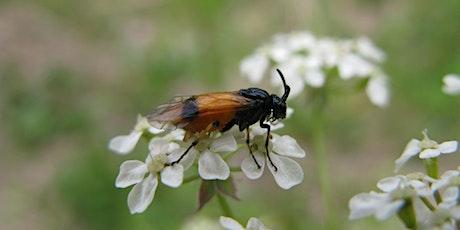 Sawflies Webinar tickets