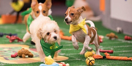 Nason's Doggy Draft tickets