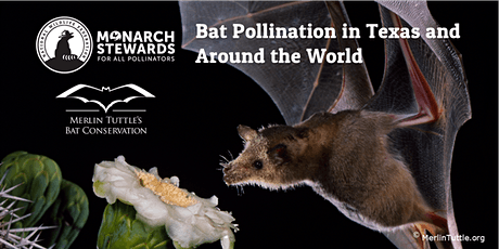 November Webinar: Bat Pollination in Texas and Around the World tickets