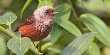 Guatemala: A Birder's Paradise tickets