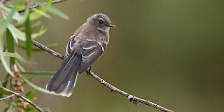 Creating Bird-friendly Gardens tickets