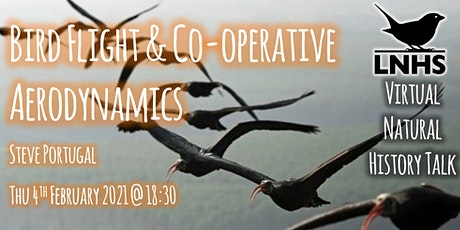 Bird Flight and Co-operative Aerodynamics by Steve Portugal