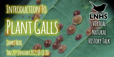 An Introduction to Plant Galls by James Heal
