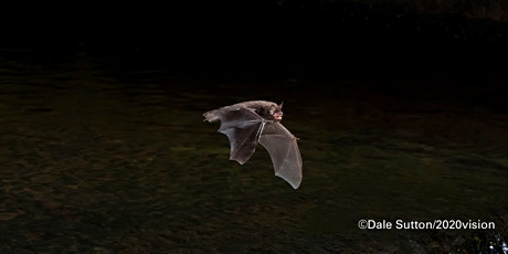 'If bats are blind, why don't they fly into trees?' tickets