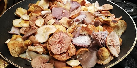 Ladybower mushroom forage and wild gin! tickets